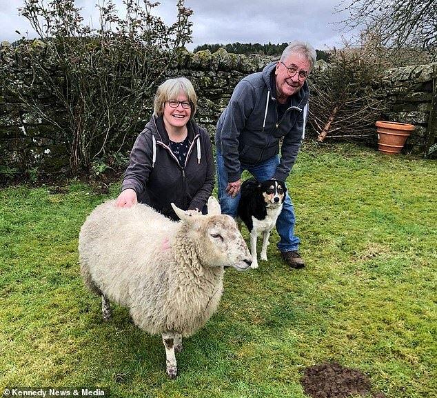 овца и собака дружат