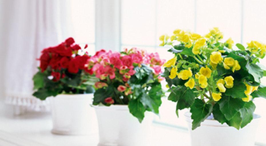 Как ухаживать закомнатными растениями