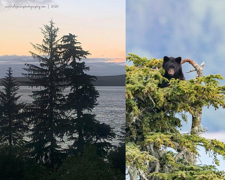 медведь надереве