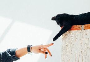 Кошка по гороскопу: какая порода подходит вашему знаку Зодиака?