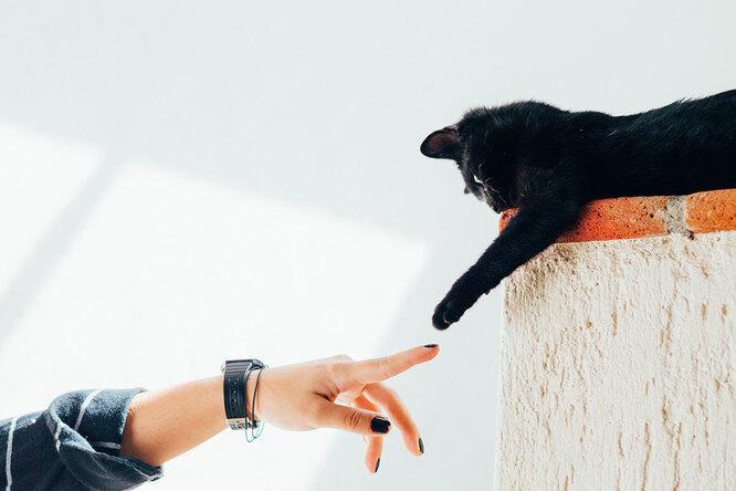 Кошка погороскопу: какая порода подходит вашему знаку Зодиака?