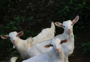 Пенсионерка из Татарстана учит коз танцевать и пишет стихи