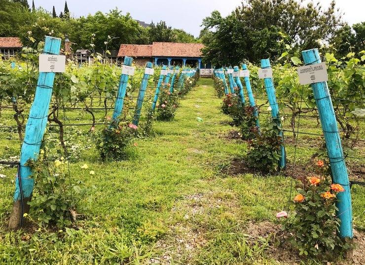 Кахетия, Грузия, Lopota Lake, виноградники