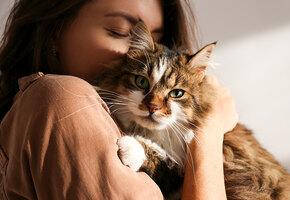 Лучший антидепрессант в мире: 7 самых ласковых пород кошек