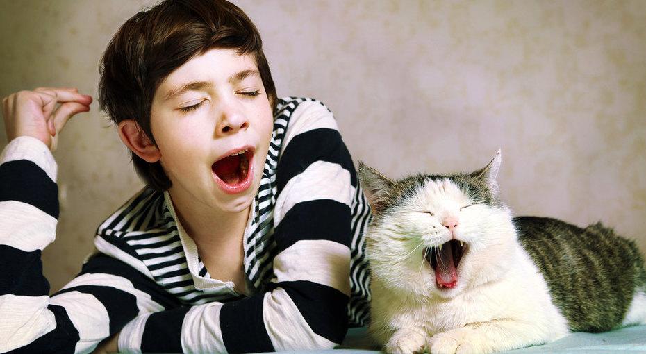 Шизофрения уподростка оказалась инфекцией, полученной отдомашнего кота