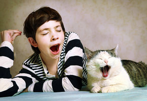Шизофрения у подростка оказалась инфекцией, полученной от домашнего кота