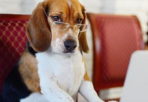 15 интересных фактов о собаках, которые могут удивить