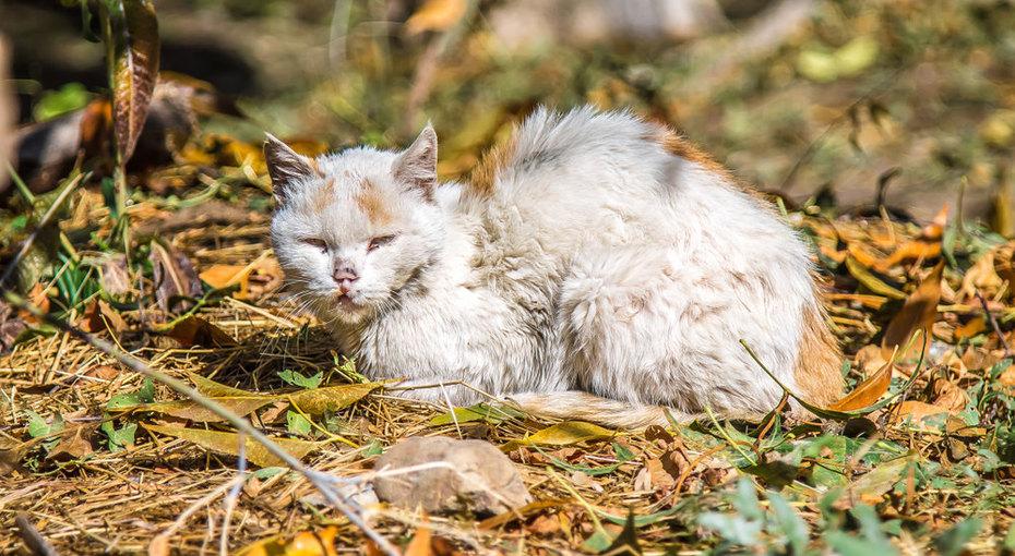 Умирающий котенок попал внужные руки ивырос вкота снеобычной внешностью