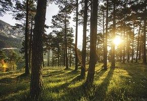 Танцующий лес и другие неразгаданные тайны нашей планеты