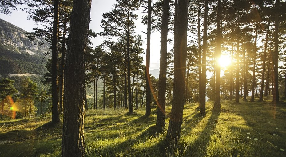Танцующий лес идругие неразгаданные тайны нашей планеты