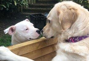 Мохнатая любовь: две собаки без ума друг от друга