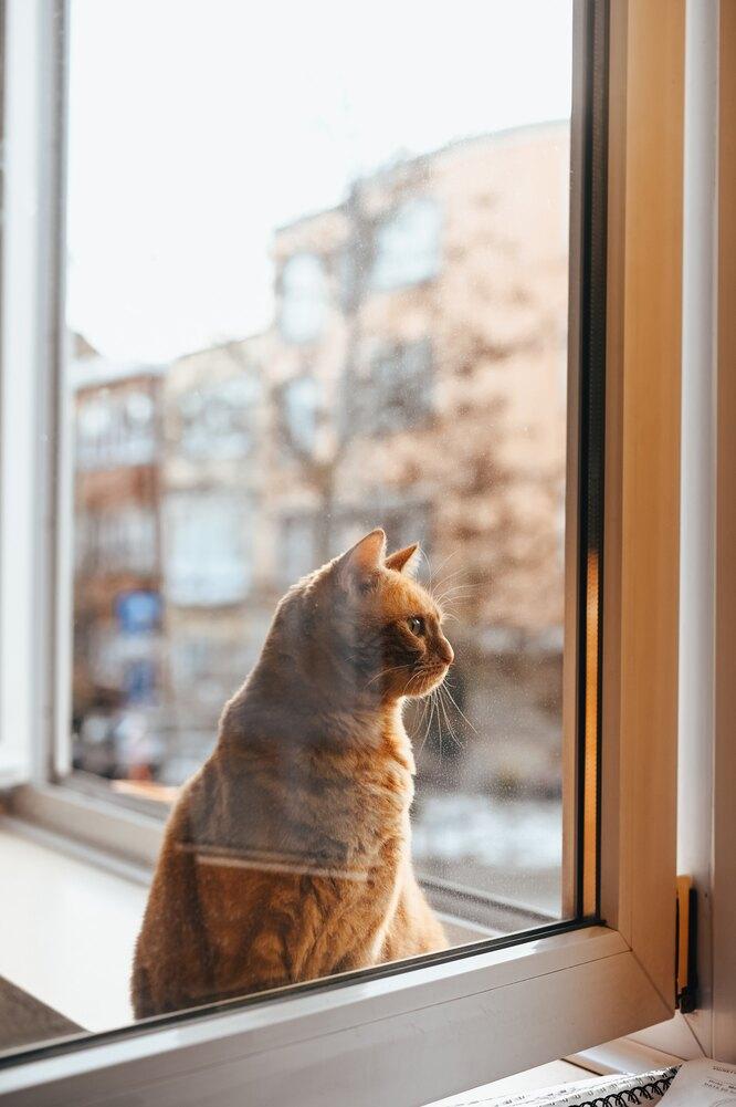 кот на окне опасность