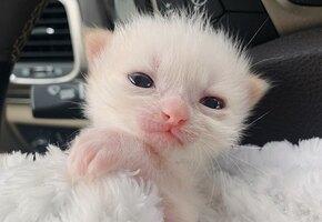 Недоношенный котенок весил всего 50 граммов. Но его хозяева не хотели сдаваться