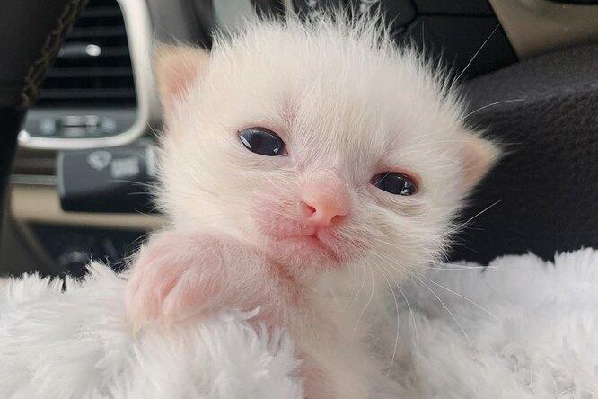 Недоношенный котенок весил всего 50 граммов. Но его хозяева нехотели сдаваться