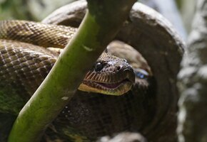 Бабушка спасла трёхлетнюю внучку после укуса смертельно ядовитой змеи