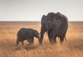 Спасенная слониха попросила смотрительницу спеть колыбельную слоненку (видео)