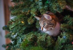 Как защитить ёлку от кота? 5 умных идей для новогоднего декора