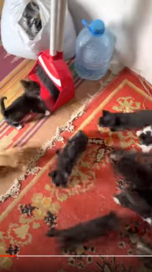 милые котята видео