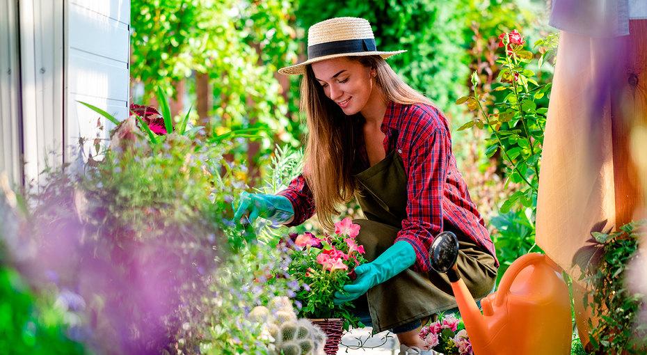 Растения против вредителей: бархатцы, мята иеще 7 цветов, которые защитят ваш сад
