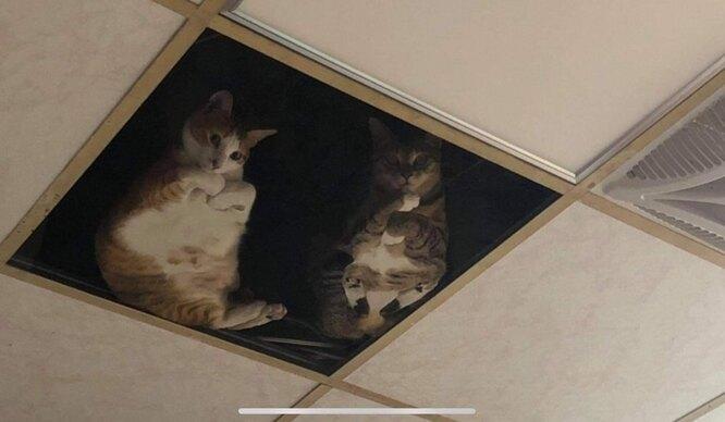 котонаблюдение, кошки