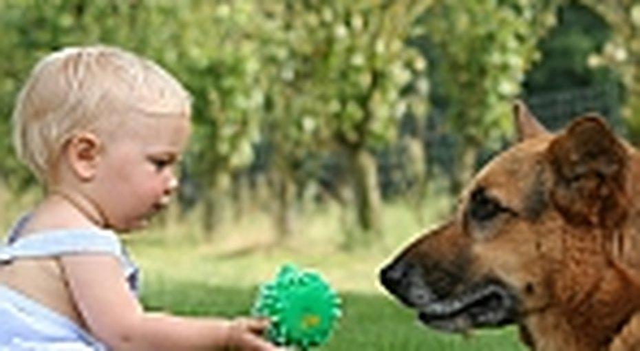 Дети понимают собак