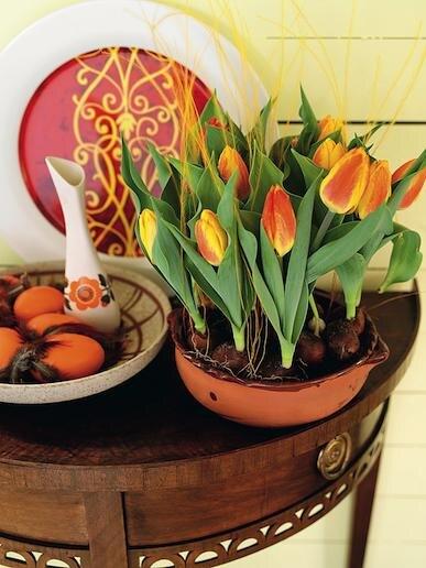Тюльпаны в горшочке