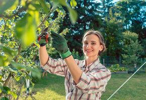 Как вырастить новый сад из черенков: 2 дедовских способа