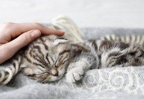 14% людей предпочитают провести жизнь с любимой кошкой, а не с мужем или женой