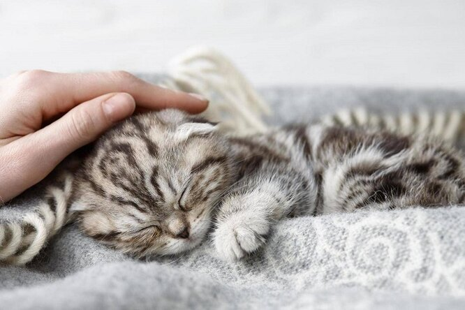 14% людей предпочитают провести жизнь слюбимой кошкой, а нес мужем или женой