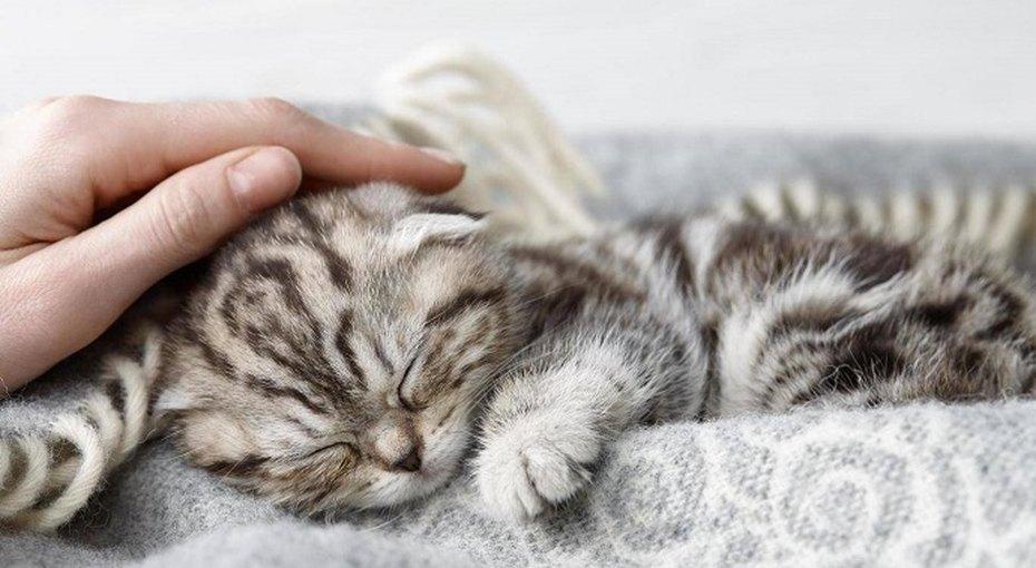 14% взрослых предпочитают провести жизнь слюбимой кошкой, а нес мужем или женой