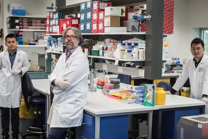 ученые создали гомункулуса