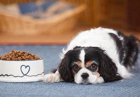 Какой корм купить для щенка? Итоги исследования Роскачества