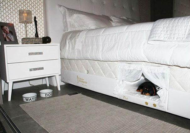 Спать вместе с хозяевами, но не в кровати