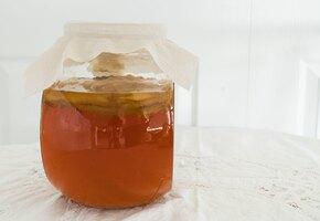 Ученые открыли секрет долгожителей на основе чайного гриба