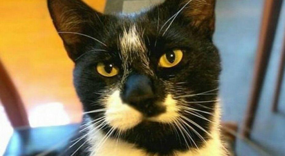 Кот поссорил влюбленных, подкинув накровать чужое нижнее белье