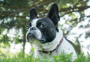 Нежная встреча: Маленький пёс пропал на каникулах и скитался почти 10 месяцев