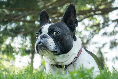 Нежная встреча: Маленький пёс пропал наканикулах искитался почти 10 месяцев