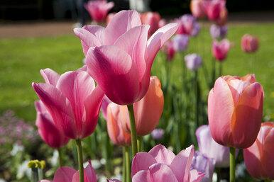 Какие цветы посадить наклумбе?