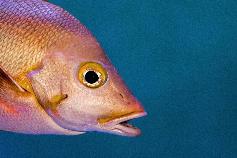 У некоторых рыб есть гены, отвечающие за восстановление сетчатки