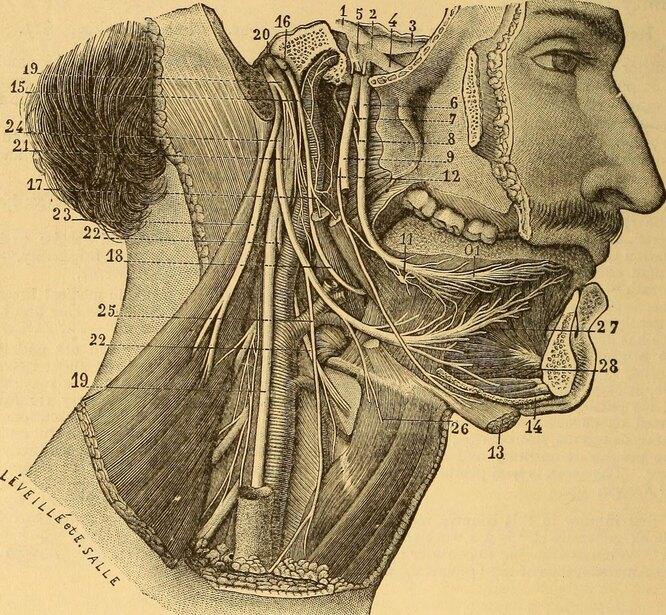 Очерки патологии и лечения сифилиса и родственных венерических заболеваний