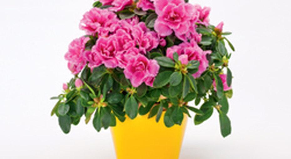 Как украсить комнату цветами
