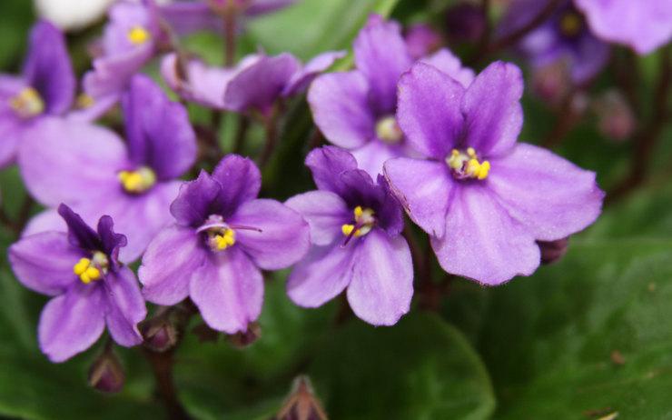 8 домашних растений, вызывающих аллергию - даже если у вас ее никогда не было