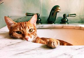 Кошка все время спала в раковине, не давая людям умыться. Вот что они придумали