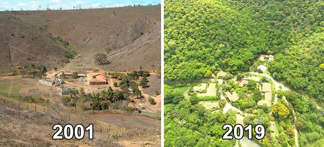 восстановление леса, институт земли, себастьяно сальгадо