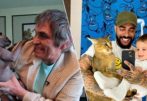 Какие кошки живут у Клаудии Шифер, Пэрис Хилтон, Бари Алибасова, Тимати?