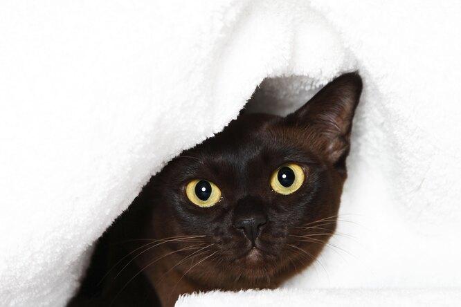 «Он издевается?» Бездомный кот научился пользоваться домофоном итроллит собаку