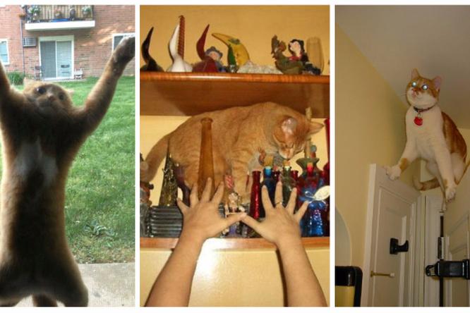 Кошки, которых завело в тупик собственное любопытство