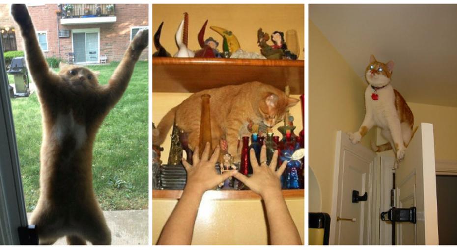 Кошки, которых завело втупик собственное любопытство