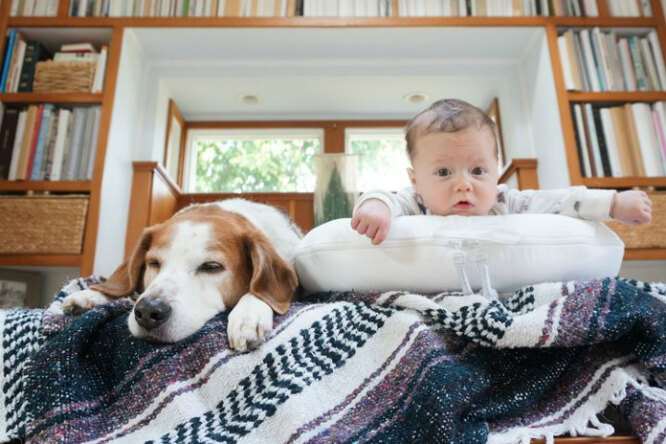 Гениальный дом длямалыша придумала пара, впервые ставшая родителями