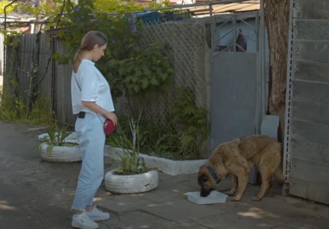служба спасения собак